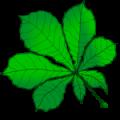 Das Kastanienblatt ist unser Logo